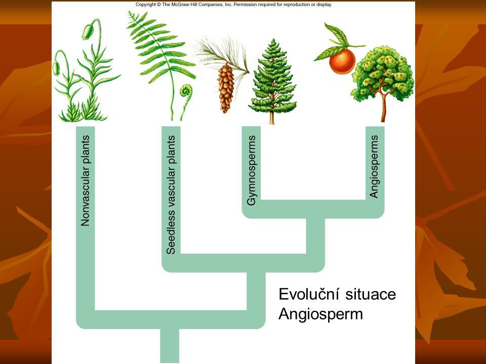 Angiosperma určitě monofyletická skupina určitě monofyletická skupina vznikly v rané křídě, před 135 milióny lety vznikly v rané křídě, před 135 milióny lety asi 257 000 druhů = 90 % všech rostlin asi 257 000 druhů = 90 % všech rostlin