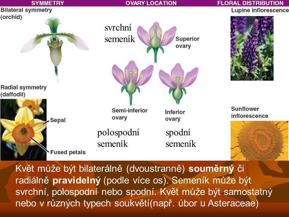 Květ může být bilaterálně (dvoustranně) souměrný či radiálně pravidelný (podle více os).