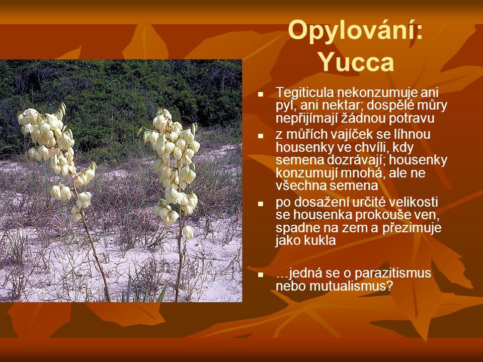 Opylování: Yucca Tegiticula nekonzumuje ani pyl, ani nektar; dospělé můry nepřijímají žádnou potravu z můřích vajíček se líhnou housenky ve chvíli, kdy semena dozrávají; housenky konzumují mnohá, ale ne všechna semena po dosažení určité velikosti se housenka prokouše ven, spadne na zem a přezimuje jako kukla …jedná se o parazitismus nebo mutualismus?
