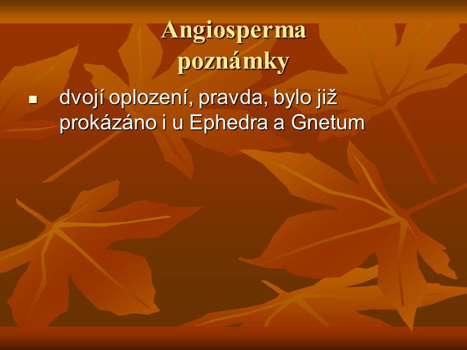 Angiosperma angeion = nádoba angeion = nádoba sperma = semeno sperma = semeno = semena jsou ukryta v pestíku = semena jsou ukryta v pestíku pestík = přeměněný list pestík = přeměněný list pestík se přeměňuje v plod, což je unikátní rys angiosperm pestík se přeměňuje v plod, což je unikátní rys angiosperm i když některá Gymnosperma, jako tis, mají kolem semene červený dužnatý obal, jeho původ je naprosto odlišný i když některá Gymnosperma, jako tis, mají kolem semene červený dužnatý obal, jeho původ je naprosto odlišný