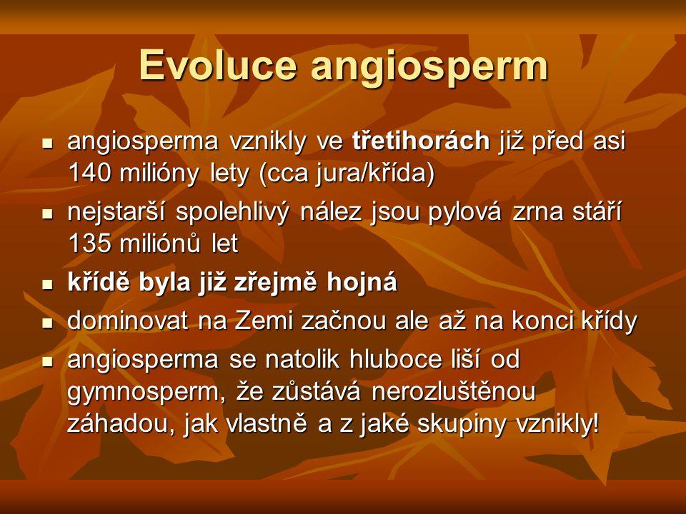 Evoluce angiosperm angiosperma vznikly ve třetihorách již před asi 140 milióny lety (cca jura/křída) angiosperma vznikly ve třetihorách již před asi 140 milióny lety (cca jura/křída) nejstarší spolehlivý nález jsou pylová zrna stáří 135 miliónů let nejstarší spolehlivý nález jsou pylová zrna stáří 135 miliónů let křídě byla již zřejmě hojná křídě byla již zřejmě hojná dominovat na Zemi začnou ale až na konci křídy dominovat na Zemi začnou ale až na konci křídy angiosperma se natolik hluboce liší od gymnosperm, že zůstává nerozluštěnou záhadou, jak vlastně a z jaké skupiny vznikly.