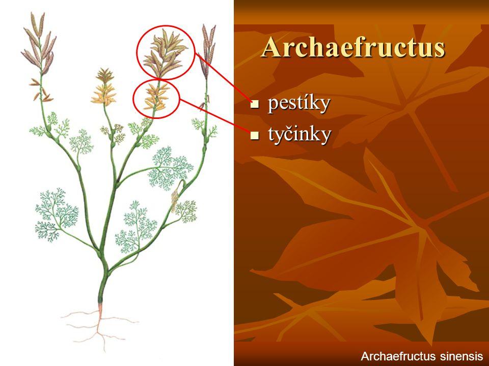 Archaefructus pestíky pestíky tyčinky tyčinky