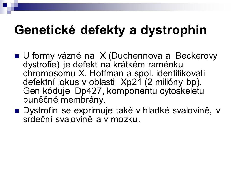 Genetické defekty a dystrophin U formy vázné na X (Duchennova a Beckerovy dystrofie) je defekt na krátkém raménku chromosomu X. Hoffman a spol. identi