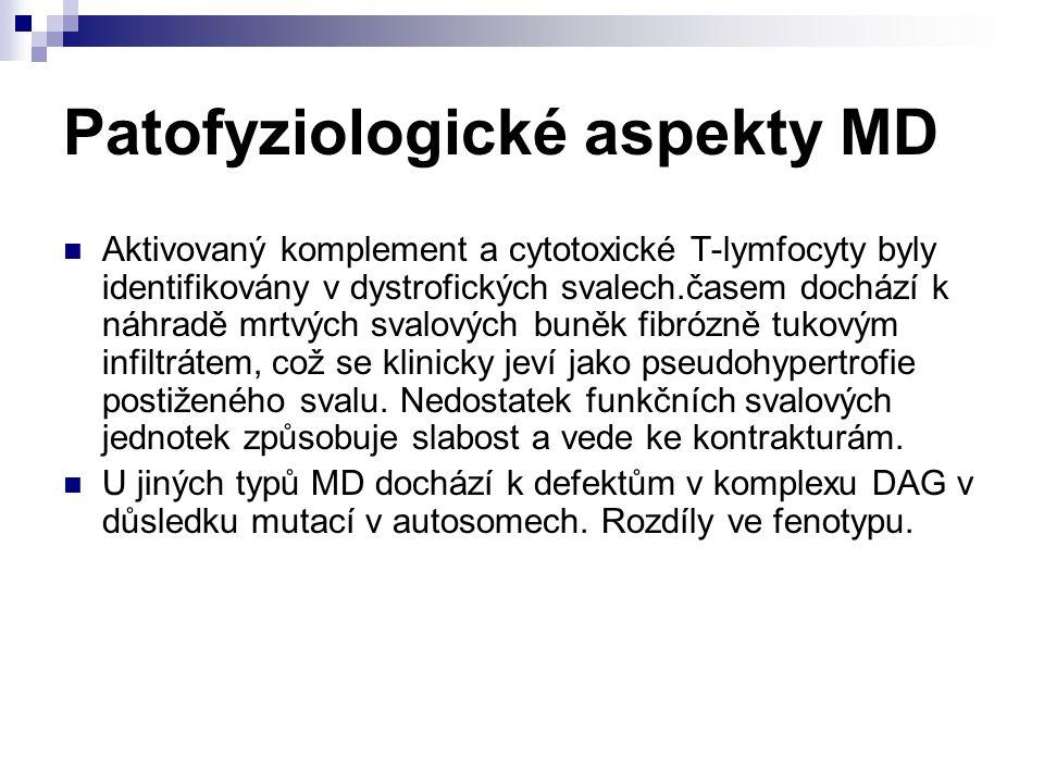 Patofyziologické aspekty MD Aktivovaný komplement a cytotoxické T-lymfocyty byly identifikovány v dystrofických svalech.časem dochází k náhradě mrtvýc