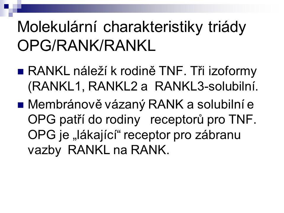 Molekulární charakteristiky triády OPG/RANK/RANKL RANKL náleží k rodině TNF. Tři izoformy (RANKL1, RANKL2 a RANKL3-solubilní. Membránově vázaný RANK a