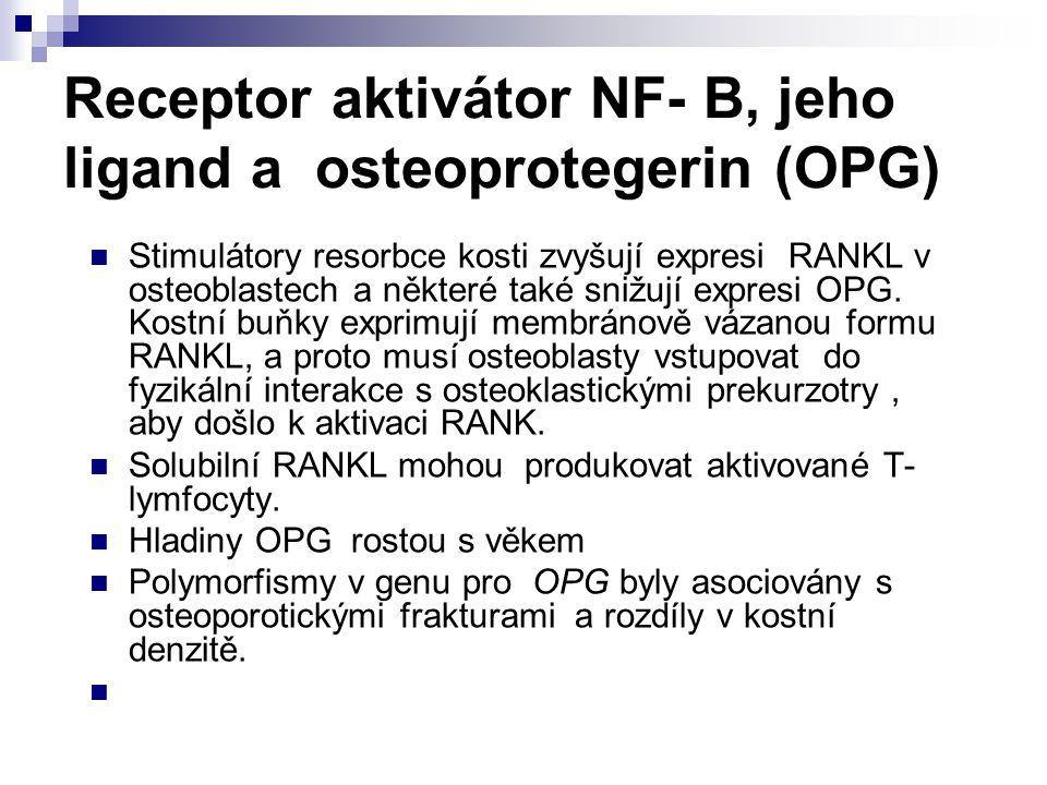 Receptor aktivátor NF- B, jeho ligand a osteoprotegerin (OPG) Stimulátory resorbce kosti zvyšují expresi RANKL v osteoblastech a některé také snižují