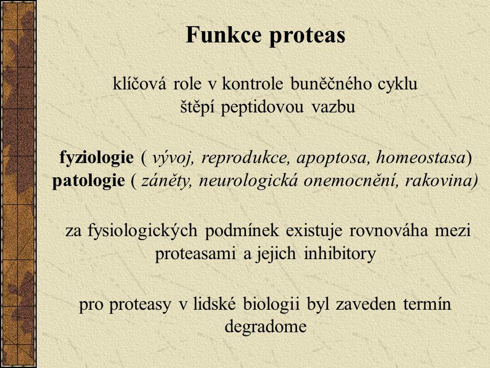 Funkce proteas klíčová role v kontrole buněčného cyklu štěpí peptidovou vazbu fyziologie ( vývoj, reprodukce, apoptosa, homeostasa) patologie ( záněty, neurologická onemocnění, rakovina) za fysiologických podmínek existuje rovnováha mezi proteasami a jejich inhibitory pro proteasy v lidské biologii byl zaveden termín degradome