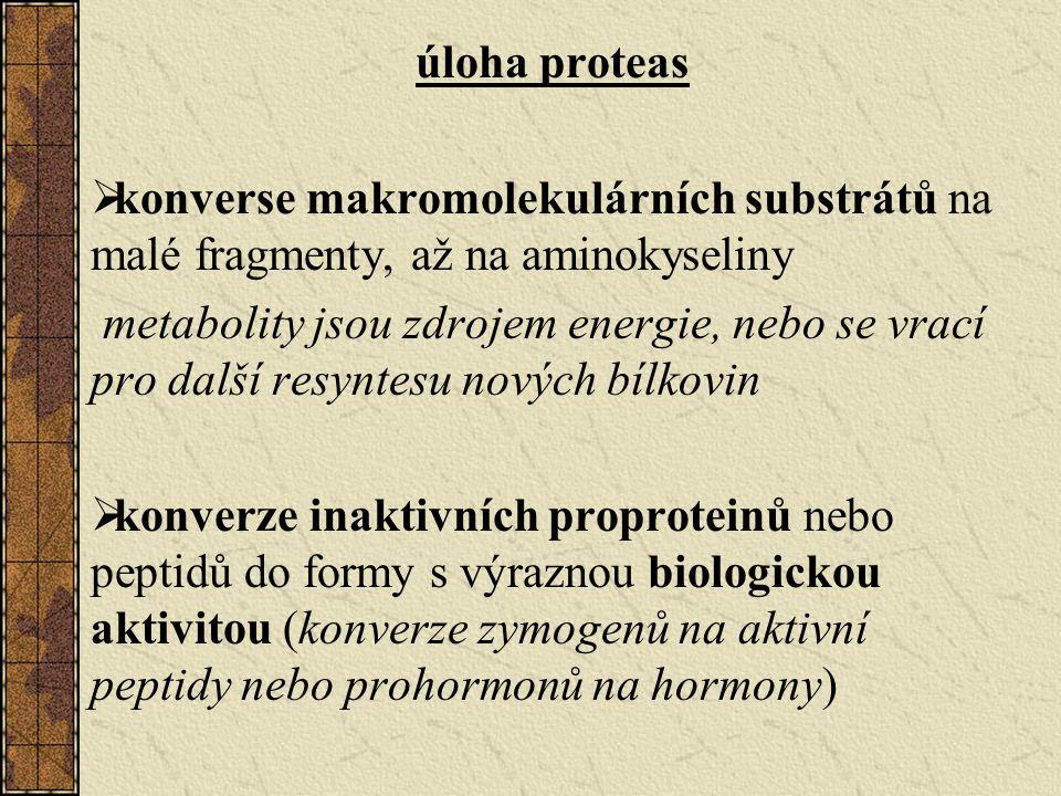 úloha proteas  konverse makromolekulárních substrátů na malé fragmenty, až na aminokyseliny metabolity jsou zdrojem energie, nebo se vrací pro další resyntesu nových bílkovin  konverze inaktivních proproteinů nebo peptidů do formy s výraznou biologickou aktivitou (konverze zymogenů na aktivní peptidy nebo prohormonů na hormony)