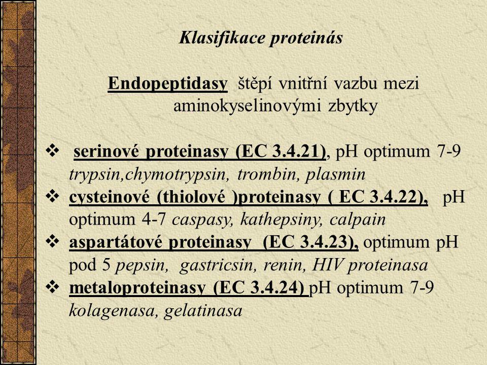Klasifikace proteinás Endopeptidasy štěpí vnitřní vazbu mezi aminokyselinovými zbytky  serinové proteinasy (EC 3.4.21), pH optimum 7-9 trypsin,chymotrypsin, trombin, plasmin  cysteinové (thiolové )proteinasy ( EC 3.4.22), pH optimum 4-7 caspasy, kathepsiny, calpain  aspartátové proteinasy (EC 3.4.23), optimum pH pod 5 pepsin, gastricsin, renin, HIV proteinasa  metaloproteinasy (EC 3.4.24) pH optimum 7-9 kolagenasa, gelatinasa