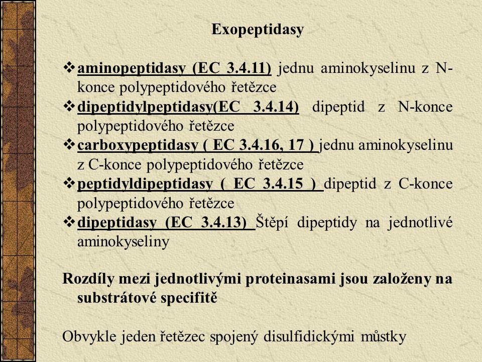 Exopeptidasy  aminopeptidasy (EC 3.4.11) jednu aminokyselinu z N- konce polypeptidového řetězce  dipeptidylpeptidasy(EC 3.4.14) dipeptid z N-konce polypeptidového řetězce  carboxypeptidasy ( EC 3.4.16, 17 ) jednu aminokyselinu z C-konce polypeptidového řetězce  peptidyldipeptidasy ( EC 3.4.15 ) dipeptid z C-konce polypeptidového řetězce  dipeptidasy (EC 3.4.13) Štěpí dipeptidy na jednotlivé aminokyseliny Rozdíly mezi jednotlivými proteinasami jsou založeny na substrátové specifitě Obvykle jeden řetězec spojený disulfidickými můstky