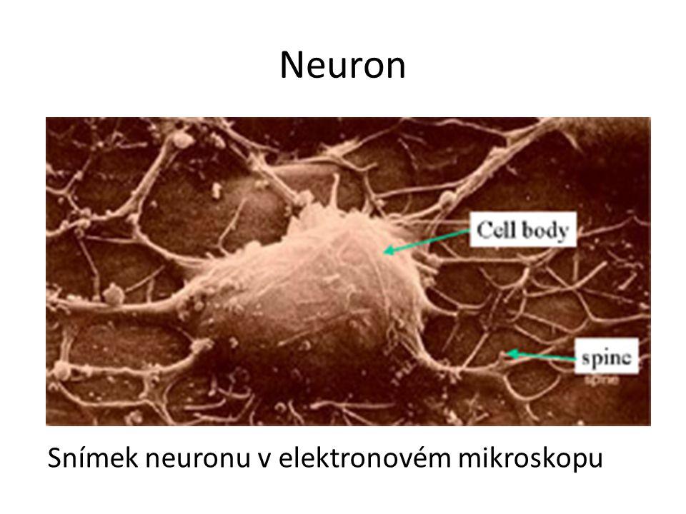 Srovnání počítač x mozek PočítačLidský mozek Výpočetní jednotka1 CPU10 11 buněk Paměť 10 9 bitů RAM, 10 11 bitů na disku 10 11 neuronů, 10 14 synapsí Délka cyklu10 -8 sekundy10 -3 sekundy Šířka pásma10 9 bitů za sekundu 10 14 bitů za sekundu Rychlost obnovy 10 9 výpočetních elementů 10 14 neuronů za sekundu