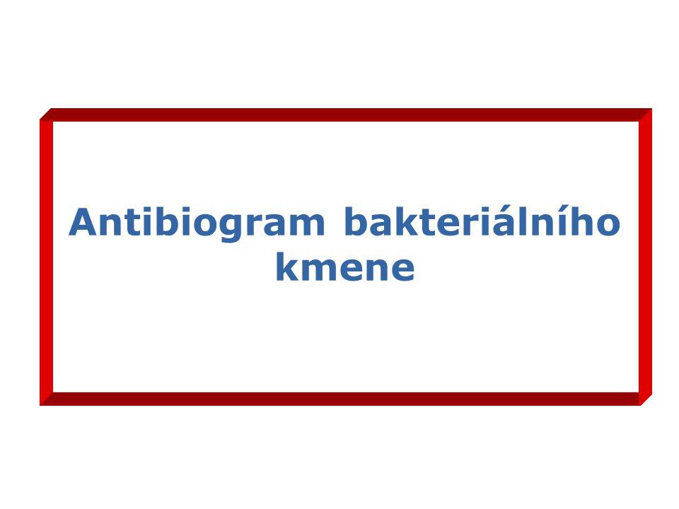 Antibiogram bakteriálního kmene
