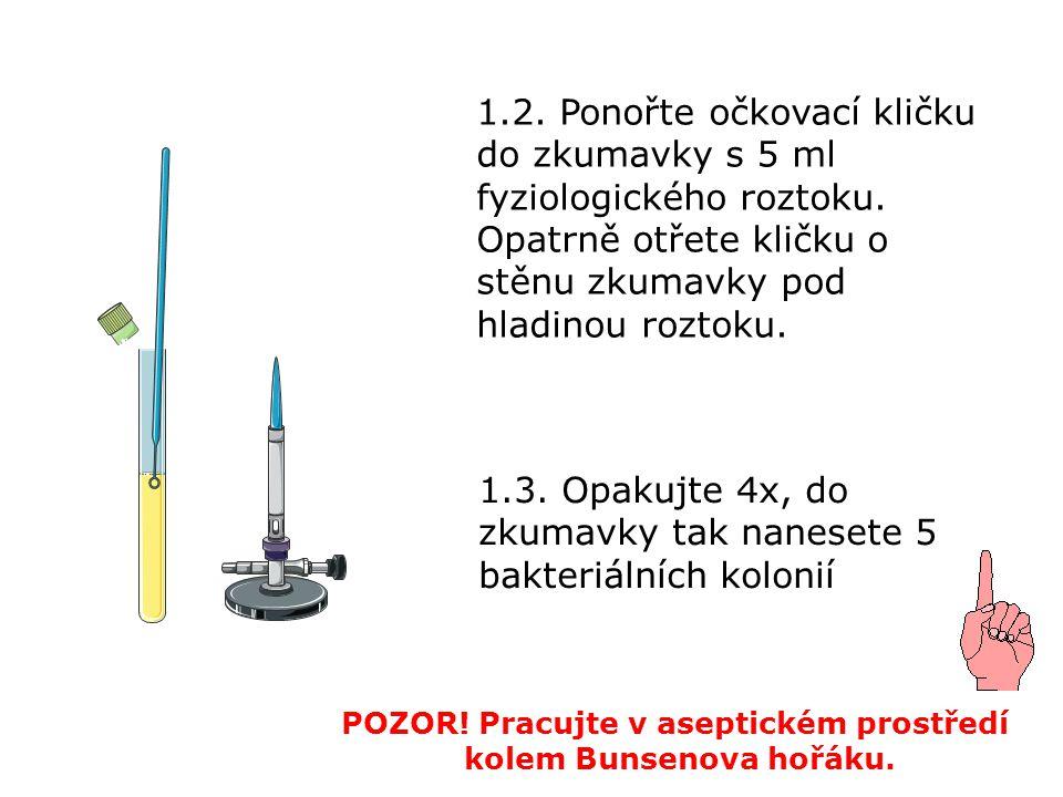 1.2. Ponořte očkovací kličku do zkumavky s 5 ml fyziologického roztoku. Opatrně otřete kličku o stěnu zkumavky pod hladinou roztoku. POZOR! Pracujte v