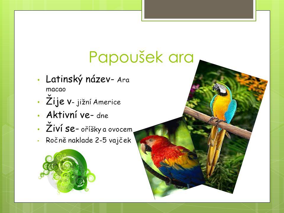 Papoušek ara Latinský název- Ara macao Žije v - jižní Americe Aktivní ve- dne Živí se- oříšky a ovocem Ročně naklade 2-5 vajček