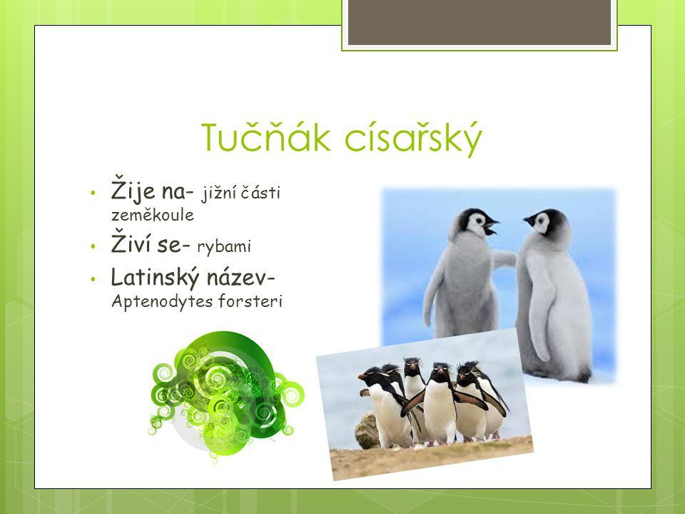 Tučňák císařský Žije na- jižní části zeměkoule Živí se- rybami Latinský název- Aptenodytes forsteri