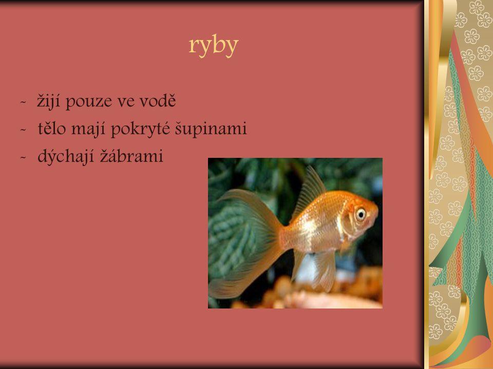 ryby - ž ijí pouze ve vod ě -t ě lo mají pokryté šupinami -dýchají ž ábrami