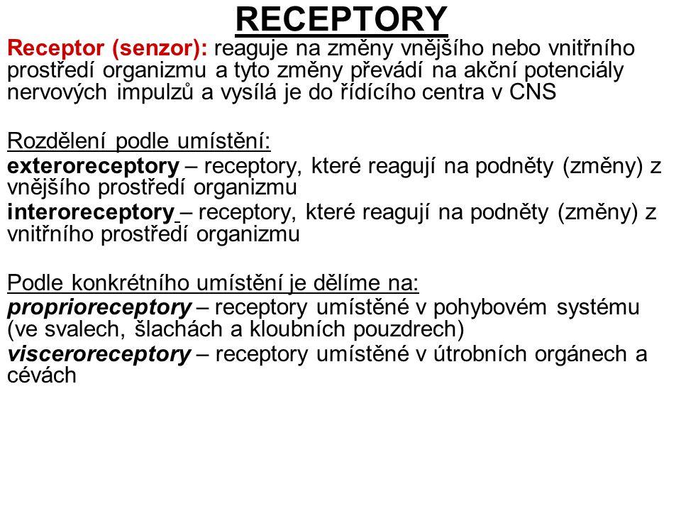 RECEPTORY Receptor (senzor): reaguje na změny vnějšího nebo vnitřního prostředí organizmu a tyto změny převádí na akční potenciály nervových impulzů a