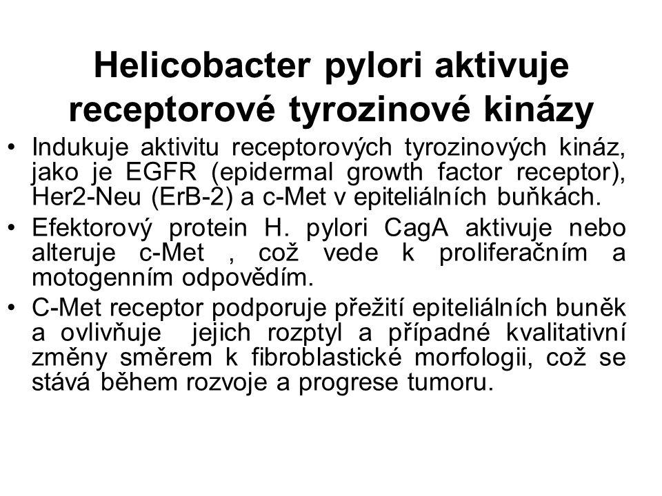 Helicobacter pylori aktivuje receptorové tyrozinové kinázy Indukuje aktivitu receptorových tyrozinových kináz, jako je EGFR (epidermal growth factor receptor), Her2-Neu (ErB-2) a c-Met v epiteliálních buňkách.