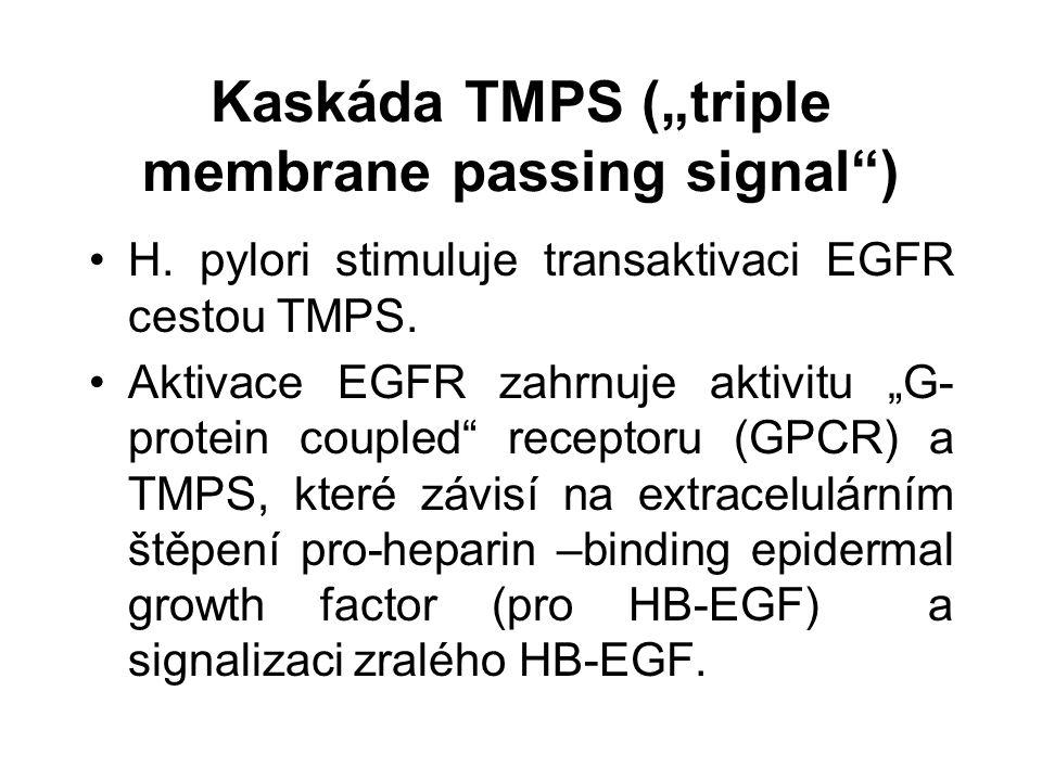 "Kaskáda TMPS (""triple membrane passing signal ) H."