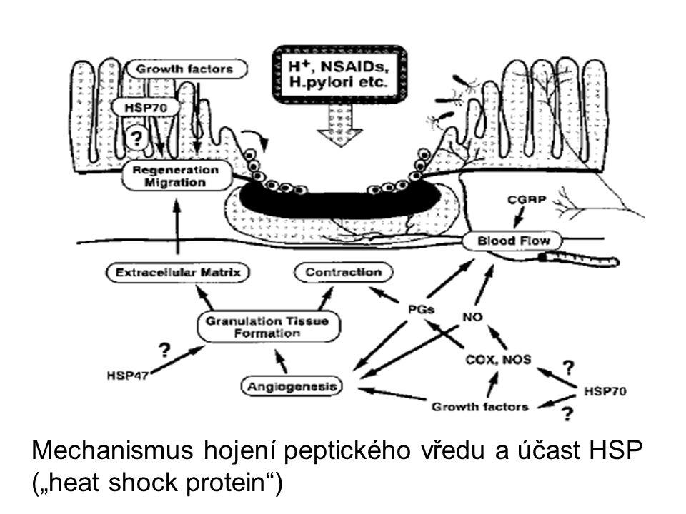 """Mechanismus hojení peptického vředu a účast HSP (""""heat shock protein )"""