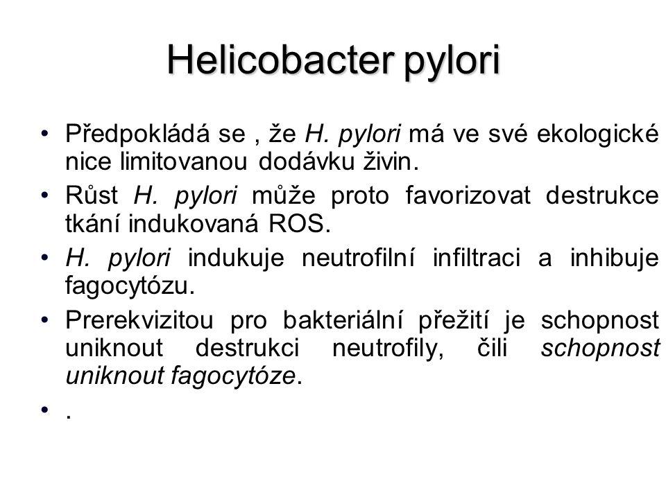 Helicobacter pylori Předpokládá se, že H.