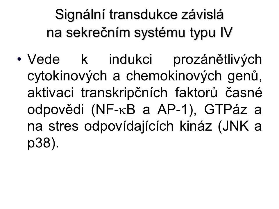 Signální transdukce závislá na sekrečním systému typu IV Vede k indukci prozánětlivých cytokinových a chemokinových genů, aktivaci transkripčních faktorů časné odpovědi (NF-  B a AP-1), GTPáz a na stres odpovídajících kináz (JNK a p38).
