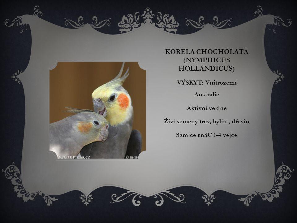 ARA HYACINTOVÝ (ANODORHYNCHUS HYACINTHINUS) VÝSKYT: žije v jižní Brazílii, východní Bolívii a v severovýchodní Paraguayi Aktivní ve dne Živí se plody