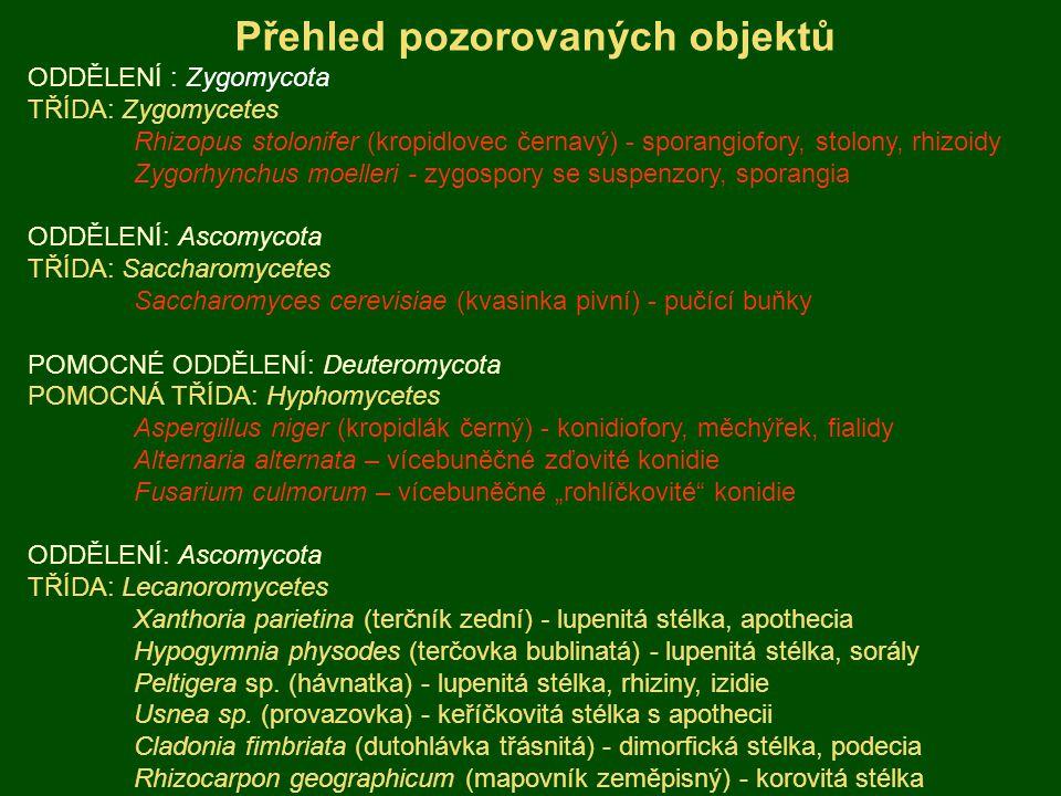 """ODDĚLENÍ : Zygomycota TŘÍDA: Zygomycetes Rhizopus stolonifer (kropidlovec černavý) - sporangiofory, stolony, rhizoidy Zygorhynchus moelleri - zygospory se suspenzory, sporangia ODDĚLENÍ: Ascomycota TŘÍDA: Saccharomycetes Saccharomyces cerevisiae (kvasinka pivní) - pučící buňky POMOCNÉ ODDĚLENÍ: Deuteromycota POMOCNÁ TŘÍDA: Hyphomycetes Aspergillus niger (kropidlák černý) - konidiofory, měchýřek, fialidy Alternaria alternata – vícebuněčné zďovité konidie Fusarium culmorum – vícebuněčné """"rohlíčkovité konidie ODDĚLENÍ: Ascomycota TŘÍDA: Lecanoromycetes Xanthoria parietina (terčník zední) - lupenitá stélka, apothecia Hypogymnia physodes (terčovka bublinatá) - lupenitá stélka, sorály Peltigera sp."""