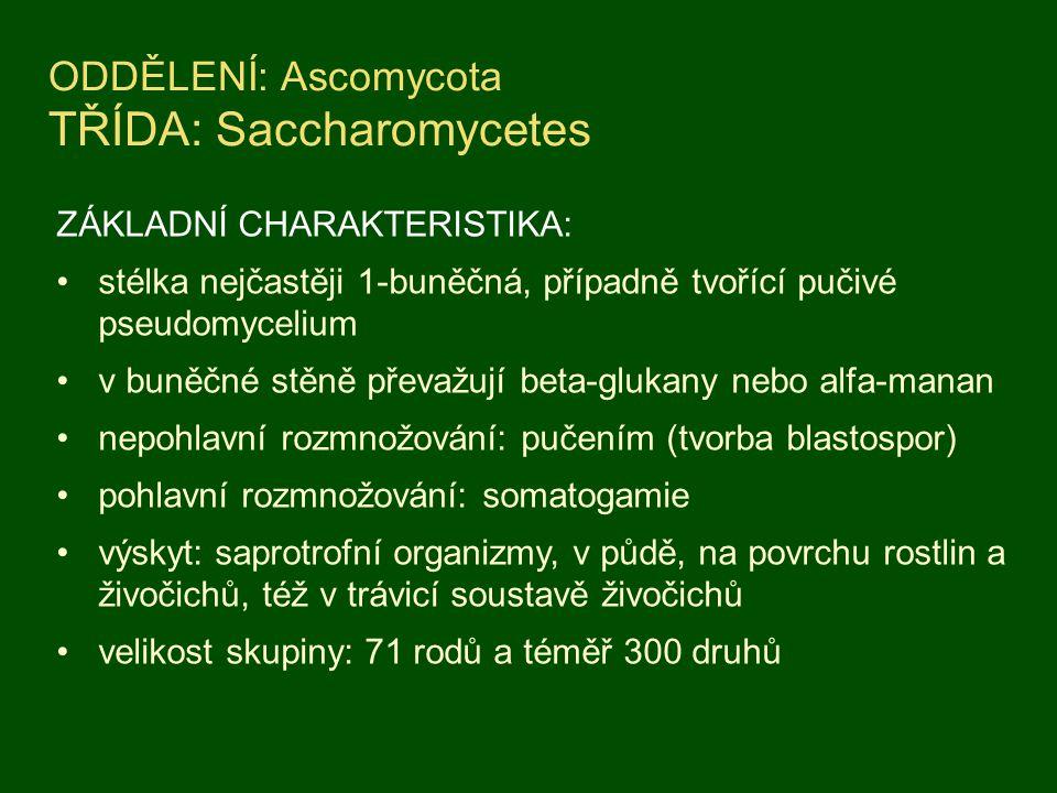 ODDĚLENÍ: Ascomycota TŘÍDA: Saccharomycetes ZÁKLADNÍ CHARAKTERISTIKA: stélka nejčastěji 1-buněčná, případně tvořící pučivé pseudomycelium v buněčné stěně převažují beta-glukany nebo alfa-manan nepohlavní rozmnožování: pučením (tvorba blastospor) pohlavní rozmnožování: somatogamie výskyt: saprotrofní organizmy, v půdě, na povrchu rostlin a živočichů, též v trávicí soustavě živočichů velikost skupiny: 71 rodů a téměř 300 druhů