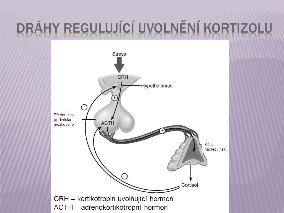 CRH – kortikotropin uvolňující hormon ACTH – adrenokortikotropní hormon Přední lalok podvěsku mozkového Kůra nadledvinek