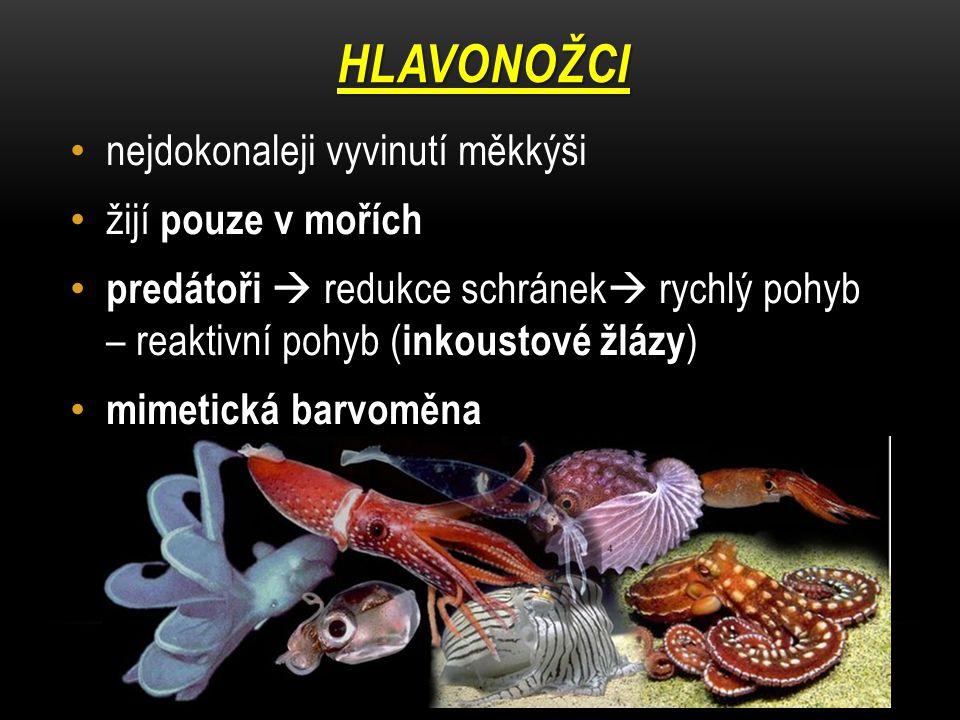 HLAVONOŽCI nejdokonaleji vyvinutí měkkýši žijí pouze v mořích predátoři  redukce schránek  rychlý pohyb – reaktivní pohyb ( inkoustové žlázy ) mimet