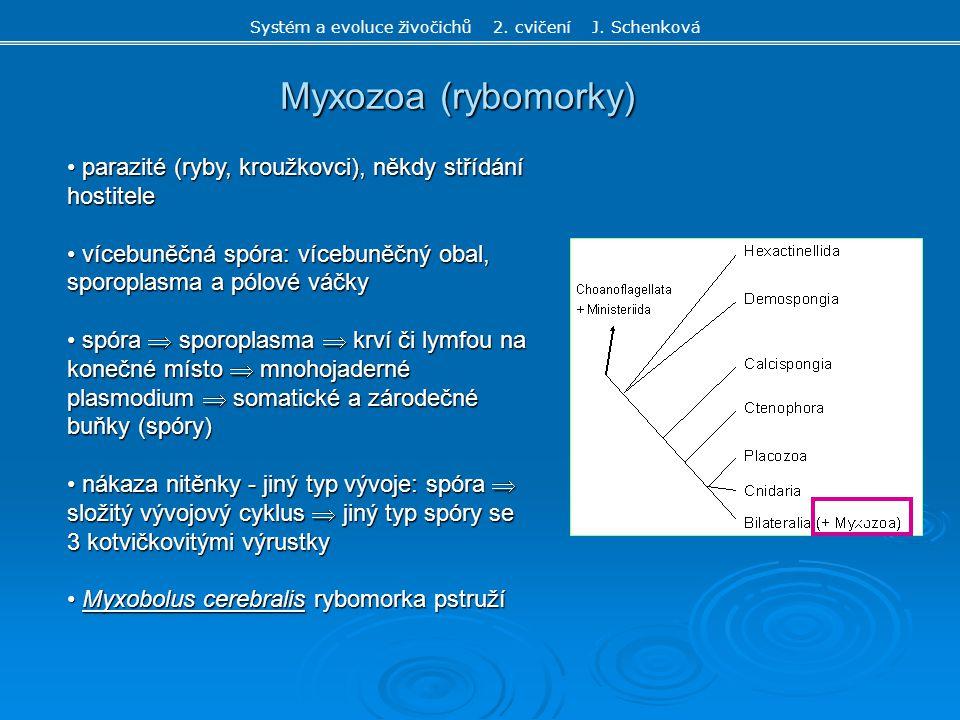 c Myxozoa (rybomorky) Systém a evoluce živočichů 2. cvičení J. Schenková parazité (ryby, kroužkovci), někdy střídání hostitele parazité (ryby, kroužko