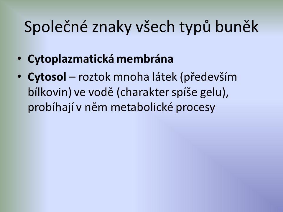 Společné znaky všech typů buněk Cytoplazmatická membrána Cytosol – roztok mnoha látek (především bílkovin) ve vodě (charakter spíše gelu), probíhají v něm metabolické procesy