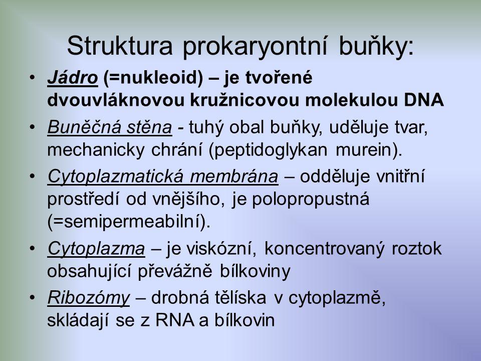 Struktura prokaryontní buňky: Jádro (=nukleoid) – je tvořené dvouvláknovou kružnicovou molekulou DNA Buněčná stěna - tuhý obal buňky, uděluje tvar, mechanicky chrání (peptidoglykan murein).