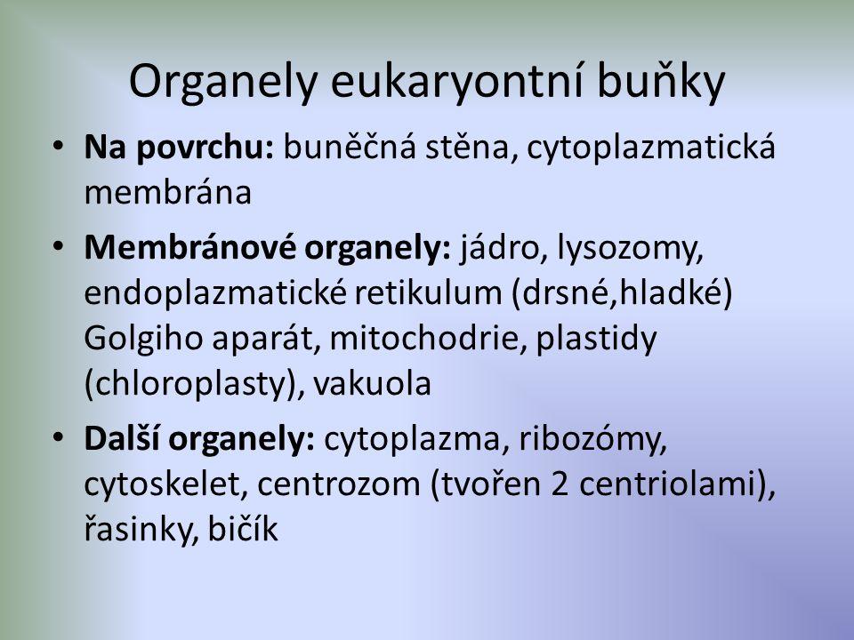 Organely eukaryontní buňky Na povrchu: buněčná stěna, cytoplazmatická membrána Membránové organely: jádro, lysozomy, endoplazmatické retikulum (drsné,hladké) Golgiho aparát, mitochodrie, plastidy (chloroplasty), vakuola Další organely: cytoplazma, ribozómy, cytoskelet, centrozom (tvořen 2 centriolami), řasinky, bičík