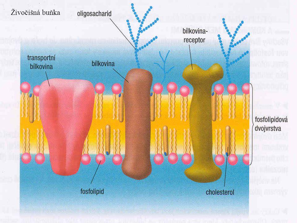 Živočišná buňka