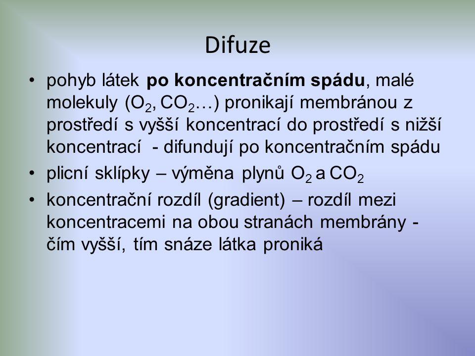 Difuze pohyb látek po koncentračním spádu, malé molekuly (O 2, CO 2 …) pronikají membránou z prostředí s vyšší koncentrací do prostředí s nižší koncentrací - difundují po koncentračním spádu plicní sklípky – výměna plynů O 2 a CO 2 koncentrační rozdíl (gradient) – rozdíl mezi koncentracemi na obou stranách membrány - čím vyšší, tím snáze látka proniká