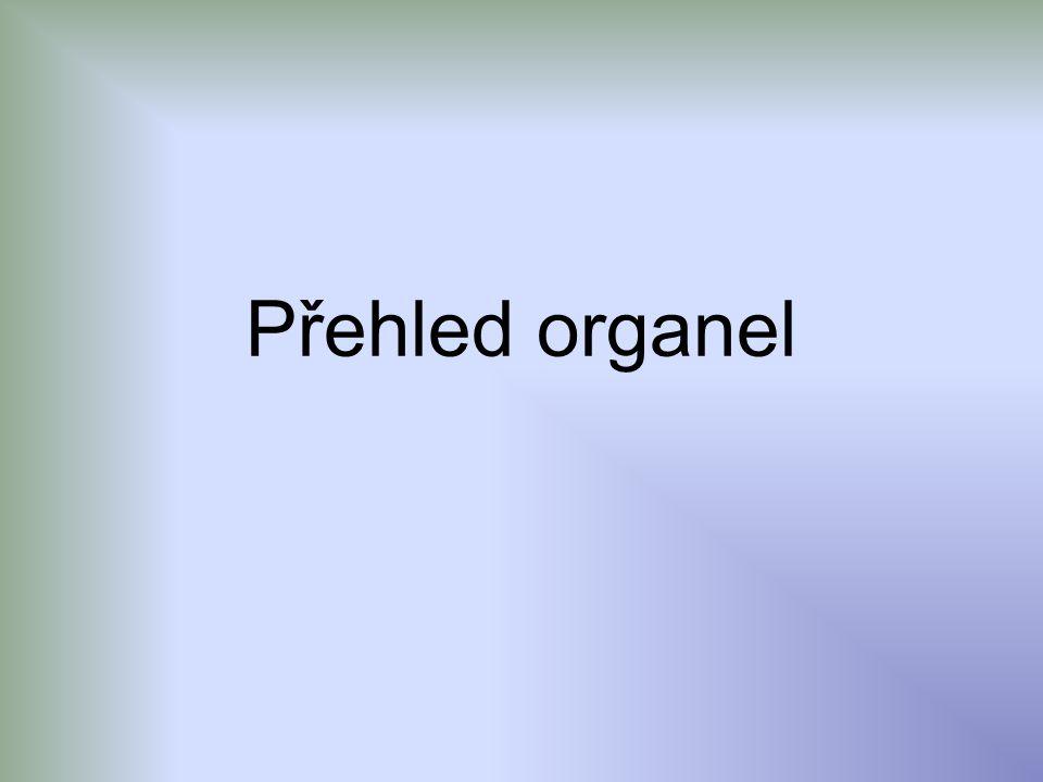 Přehled organel
