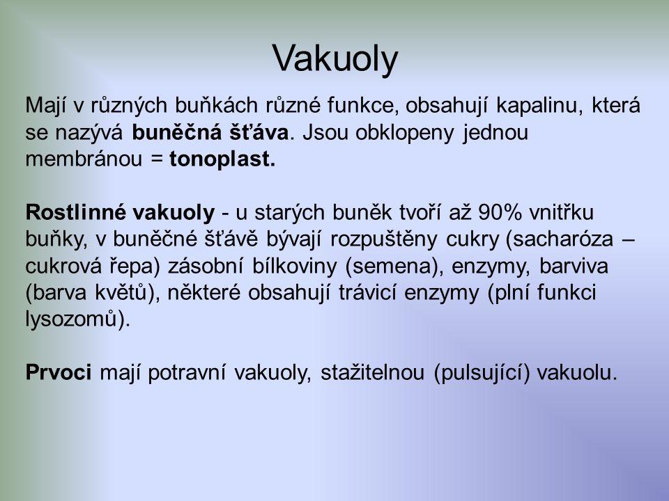 Vakuoly Mají v různých buňkách různé funkce, obsahují kapalinu, která se nazývá buněčná šťáva.