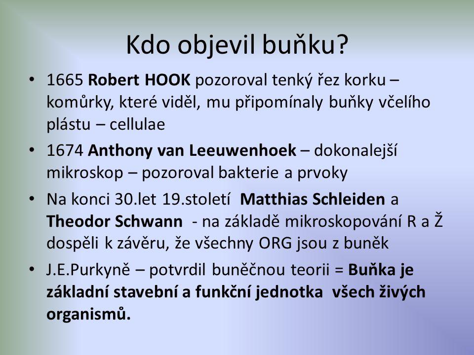 1665 Robert HOOK pozoroval tenký řez korku – komůrky, které viděl, mu připomínaly buňky včelího plástu – cellulae 1674 Anthony van Leeuwenhoek – dokonalejší mikroskop – pozoroval bakterie a prvoky Na konci 30.let 19.století Matthias Schleiden a Theodor Schwann - na základě mikroskopování R a Ž dospěli k závěru, že všechny ORG jsou z buněk J.E.Purkyně – potvrdil buněčnou teorii = Buňka je základní stavební a funkční jednotka všech živých organismů.
