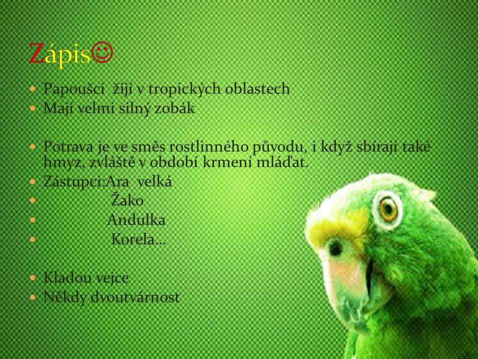 Papoušci žijí v tropických oblastech Mají velmi silný zobák Potrava je ve směs rostlinného původu, i když sbírají také hmyz, zvláště v období krmení m