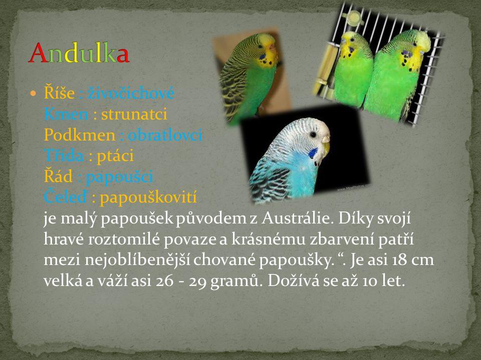 Říše : živočichové Kmen : strunatci Podkmen : obratlovci Třída : ptáci Řád : papoušci Čeleď : papouškovití je malý papoušek původem z Austrálie. Díky