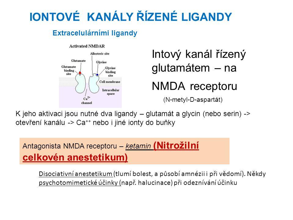 (N-metyl-D-aspartát) K jeho aktivaci jsou nutné dva ligandy – glutamát a glycin (nebo serin) -> otevření kanálu -> Ca ++ nebo i jiné ionty do buňky An