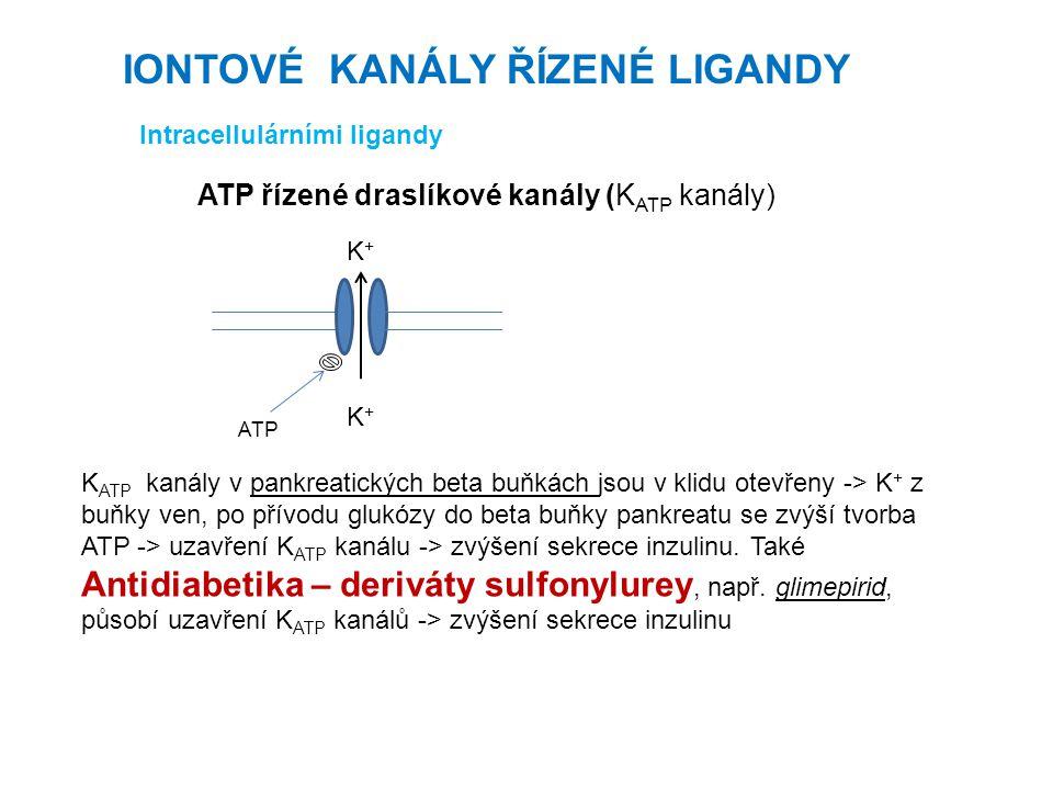 Intracellulárními ligandy ATP řízené draslíkové kanály (K ATP kanály) K ATP kanály v pankreatických beta buňkách jsou v klidu otevřeny -> K + z buňky