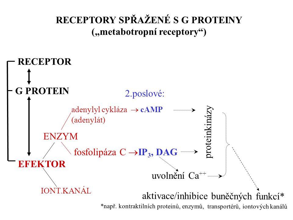 """ENZYM adenylyl cykláza  cAMP (adenylát) fosfolipáza C  IP 3, DAG proteinkinázy RECEPTORY SPŘAŽENÉ S G PROTEINY (""""metabotropní receptory"""") G PROTEIN"""