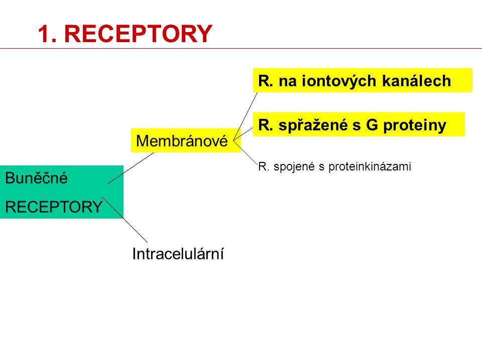 Buněčné RECEPTORY Membránové Intracelulární R. na iontových kanálech R. spřažené s G proteiny R. spojené s proteinkinázami 1. RECEPTORY