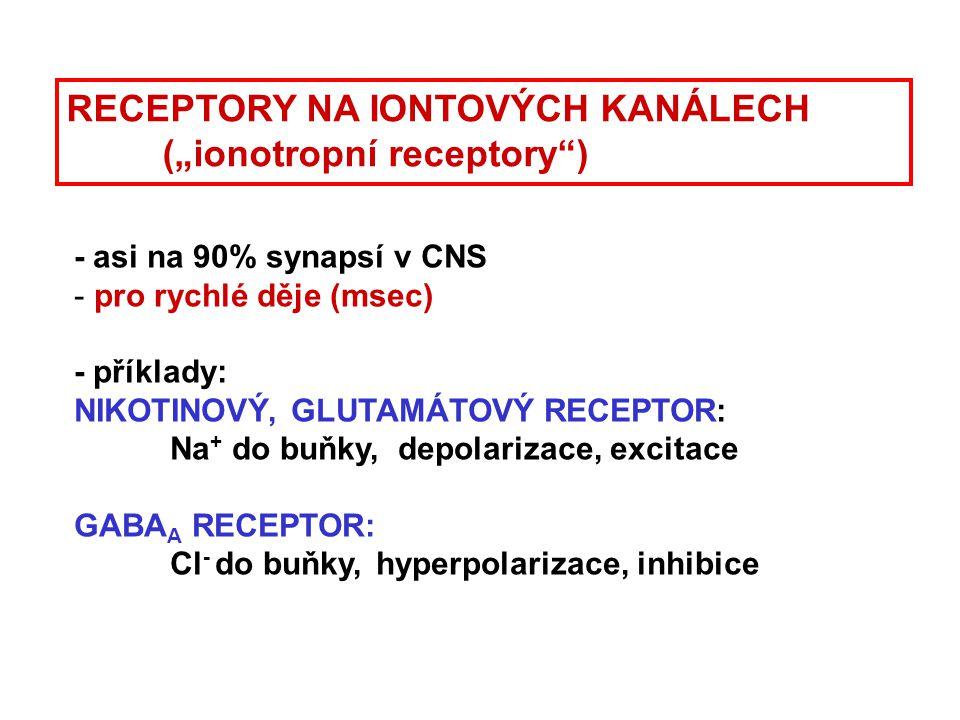 - asi na 90% synapsí v CNS - pro rychlé děje (msec) - příklady: NIKOTINOVÝ, GLUTAMÁTOVÝ RECEPTOR: Na + do buňky, depolarizace, excitace GABA A RECEPTO