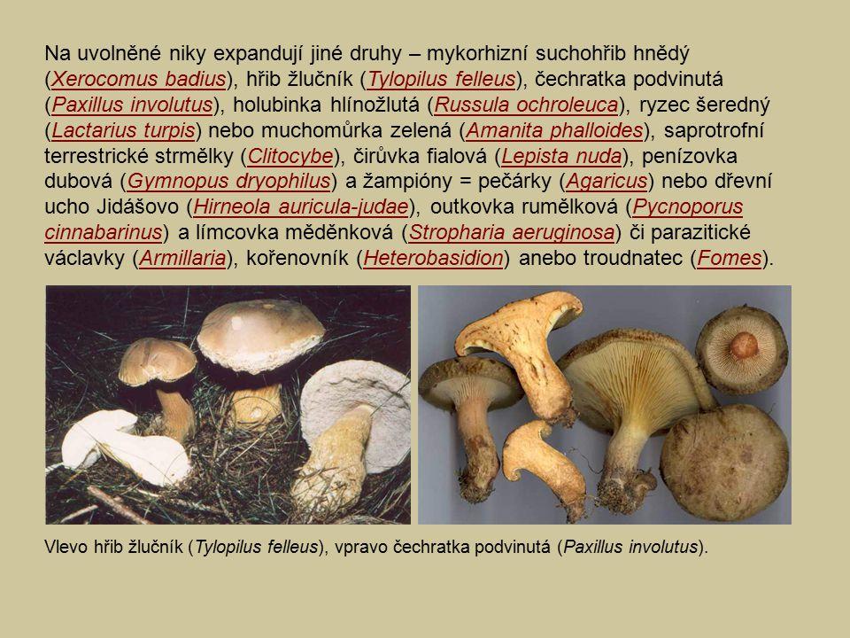 Na uvolněné niky expandují jiné druhy – mykorhizní suchohřib hnědý (Xerocomus badius), hřib žlučník (Tylopilus felleus), čechratka podvinutá (Paxillus