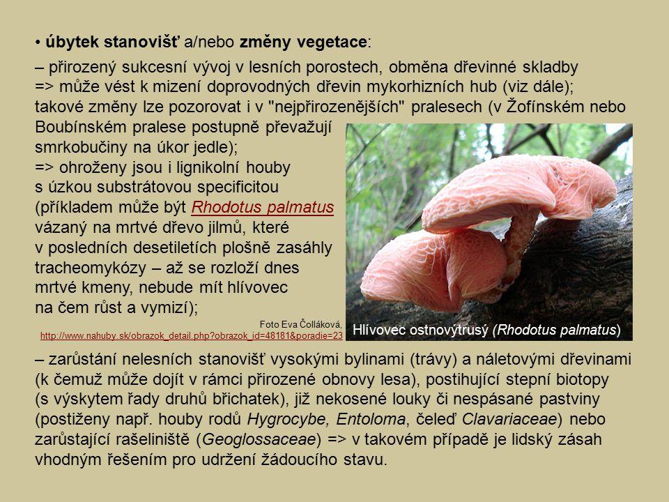 úbytek stanovišť a/nebo změny vegetace: – přirozený sukcesní vývoj v lesních porostech, obměna dřevinné skladby => může vést k mizení doprovodných dře