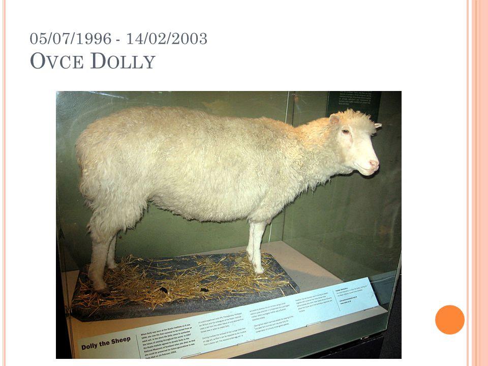05/07/1996 - 14/02/2003 O VCE D OLLY